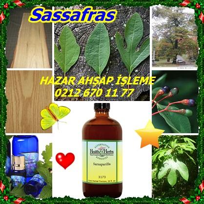 catscatssafsafras453543