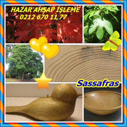 catscatssafsafras878