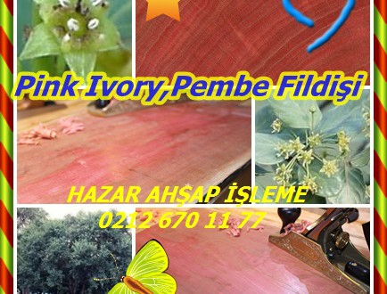 Pink Ivory,Pembe Fildişi, Kırmızı Ivorywood,(Berchemia zeyheri),Muvhunambezo
