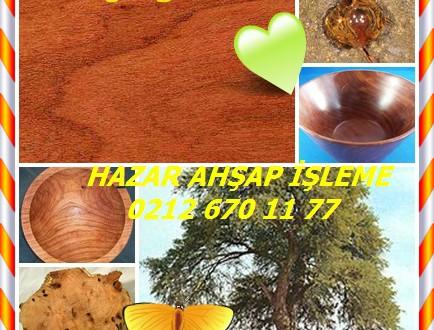 Prosopis juliflora,Mesquite,(Prosopis juliflora),Prosopis juliflora, Mesquite, Mathenge (Kenya),algarroba, eterai, Ironwood (Turkana)