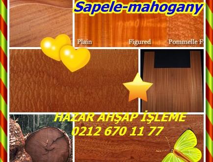 Sapele-mahogany,Sapelli (Entandrophragma cylindricum),Sapelli, Sapelli mahagany ,sapeli mahonie,aboudikro , bibitu, lotouhé, abitigbro, boubousson, pan , penkwa , agiekpogo