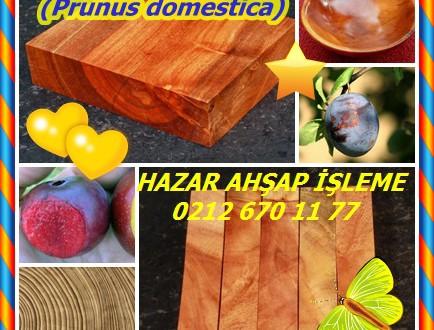 Plum, (Prunus domestica),Erik