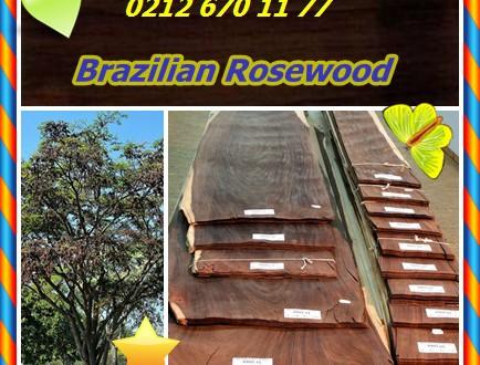 Brazilian Rosewood, (Dalbergia nigra),Bahia Rosewood, Jacaranda,Piyano ahşap, Caviuna, Obuina Drago,obuina,pau-preto