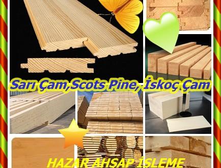 Sarı çam: (Pinus sylvestris),Scots Pine, İskoç Çam,Riga çam , Norveç çam,Sarı Çam