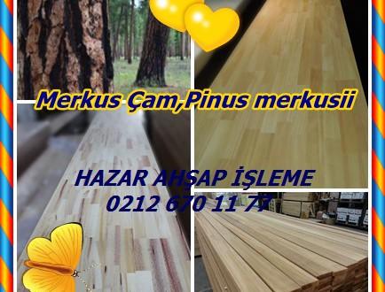 Sumatra Çam, Merkus Çam,Pinus merkusii,Merkus en Çam, Mindoro Çam,