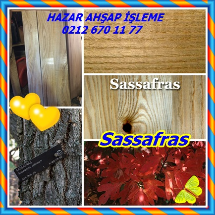 catssafsafras12