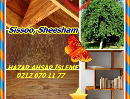 Sissoo, Sheesham ,(Dalbergia sissoo),shisham, sissoo ağacı, Native, Hint gül ağacı