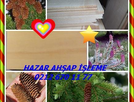 Engelmann Ladin ,Engelmann Spruce,(Picea engelmannii), beyaz ladin ,  dağ ladin , gümüş ladin, Kolomb ladin,Meksika Ladin