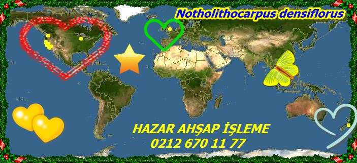 map_of_Lithocarpus_densiflorus