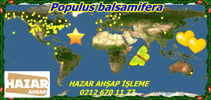 map_of_Populus_balsamifera