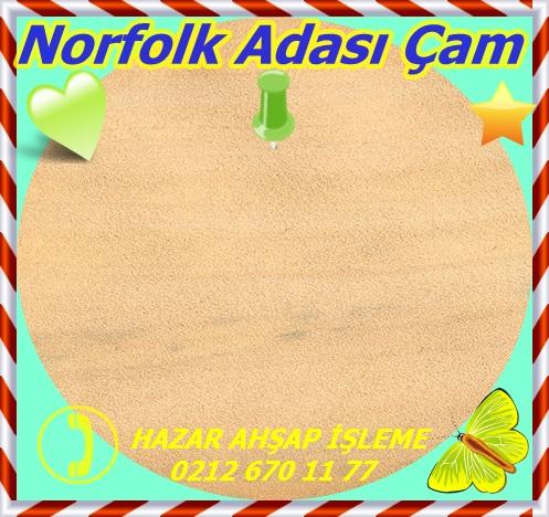 norfolk-island-pine