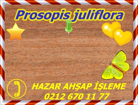 prosopis-juliflora