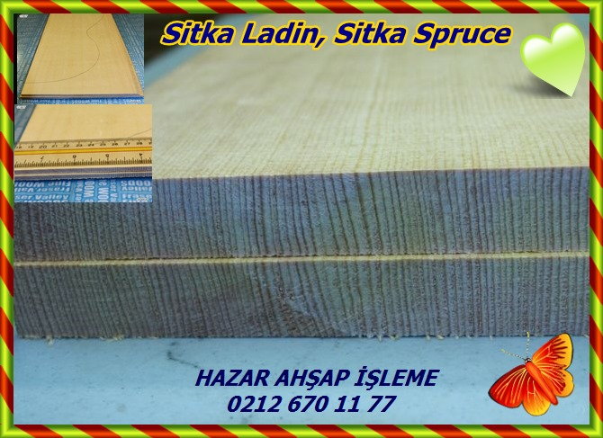 s-l640(Picea sitchensis)