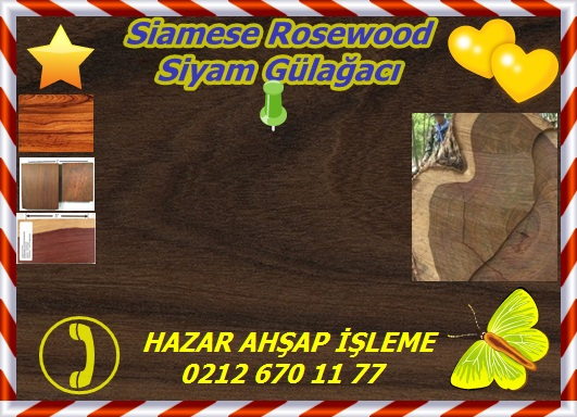 siamese-rosewood-sealed