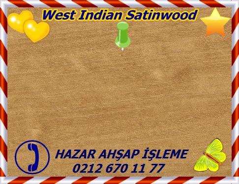 west-indianWest Indian Satinwood