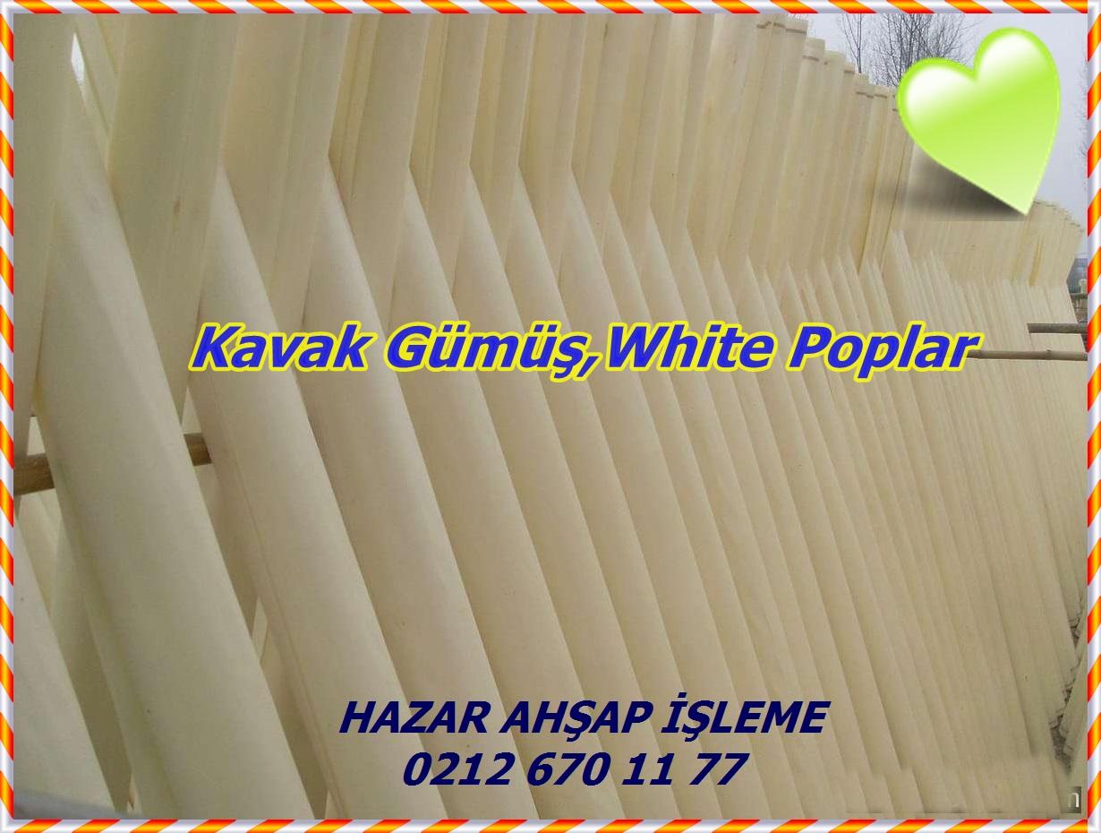 wood_materials_bleached_poplar_veneer_tq-1186881017