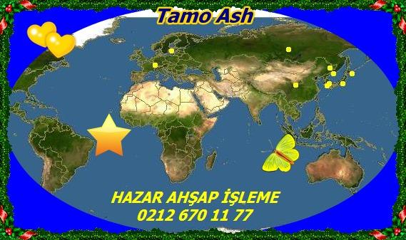 20mTamo Ash