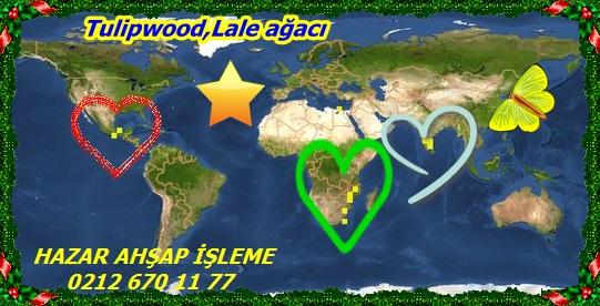 3Tulipwood,Lale ağacı44