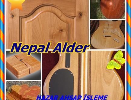 Nepal Alder ,Kırmızı Alder (Alnus nepalensis), Nepal Alder, İYE, Nepal Siyah Sedir,Himalaya kızılağaç, Hint Alder ,