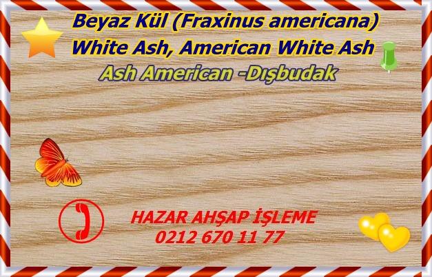 Ash-American-Dışbudak1