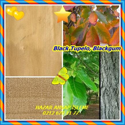 Black Tupelo22