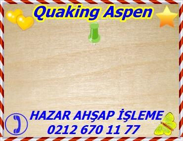 aspen-big