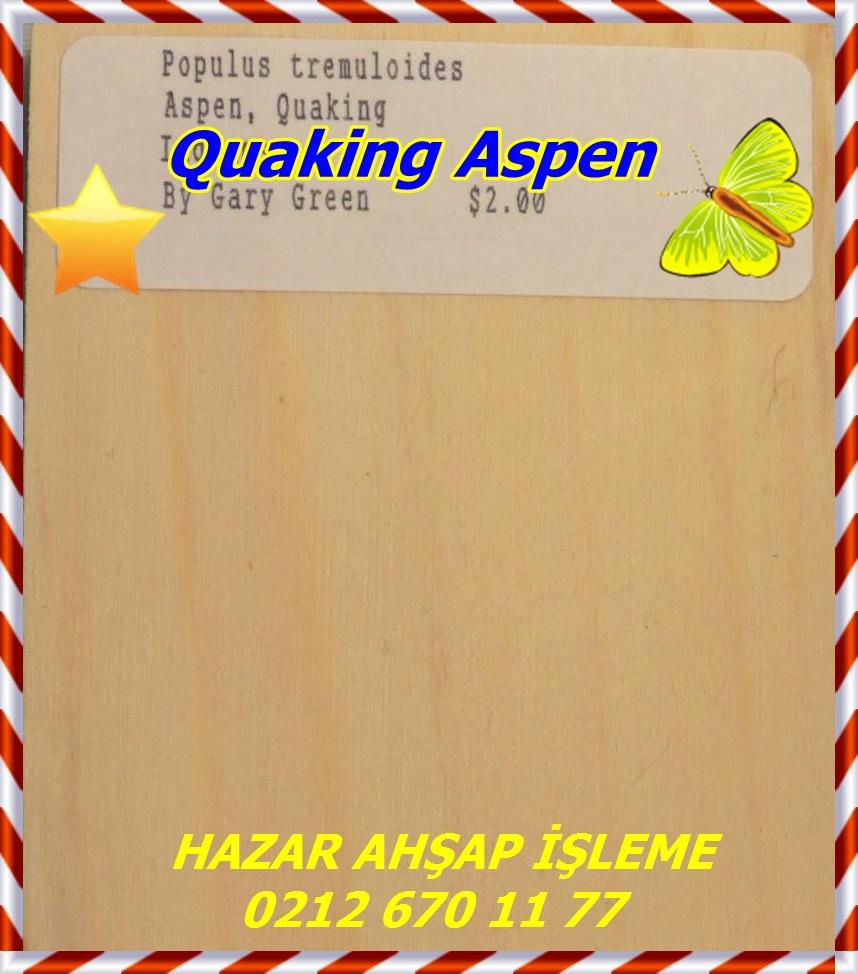 aspen, quaking 1a s50 plh