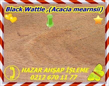 black-wattle33
