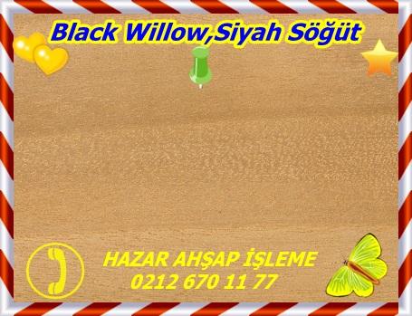 blackBlack Willow,Siyah Söğüt