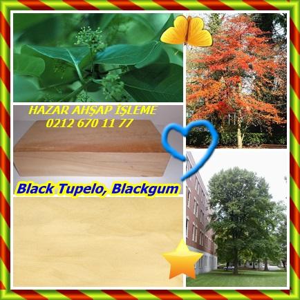 catsBlack Tupelo443