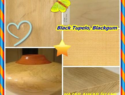 Black Tupelo, Blackgum,Siyah Tupelo, (Nyssa sylvatica),Siyah Tupelo, Blackgum, Pepperidge, tupelo ve tupelogum, Siyah Sakız ve Ekşi Sakız vardır, Sourgum,Mustatupelo