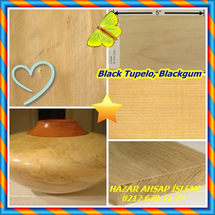 catsBlack Tupelo878