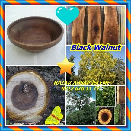 catsBlack Walnut11