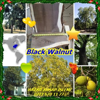 catsBlack Walnut778