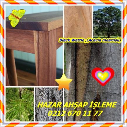 catsBlack Wattle ,(Acacia mearn44
