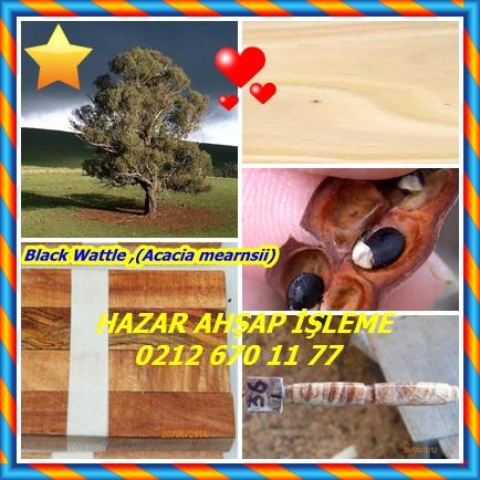 catsBlack Wattle ,(Acacia mearnsii)33