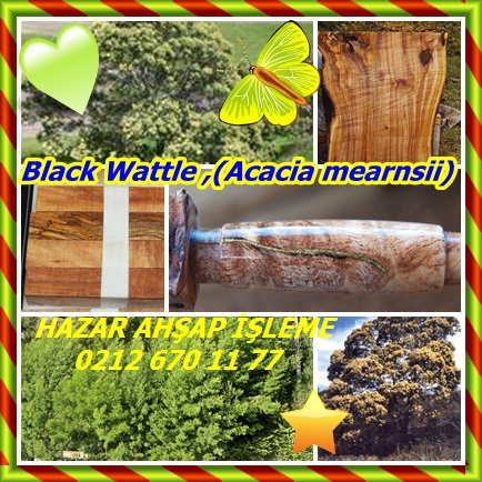 catsBlack Wattle ,(Acacia mearnsii)88