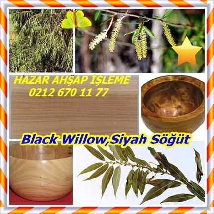 catsBlack Willow,Siyah Söğüt22