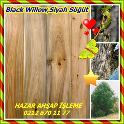 catsBlack Willow,Siyah Söğüt66