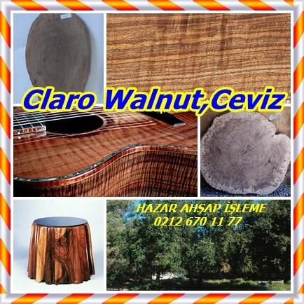 catsClaro Walnut,Ceviz5555