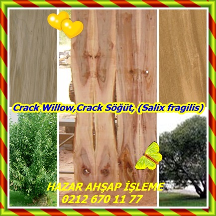 catsCrack Willow,Crack Söğü222