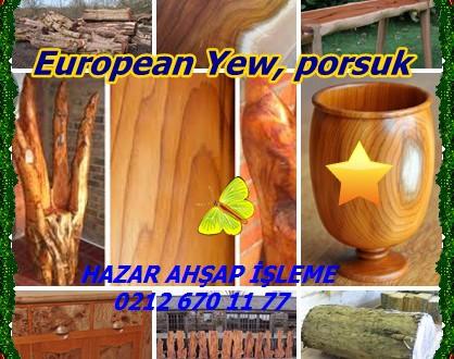 European Yew,Avrupa porsuk ağacı (Taxus baccata),