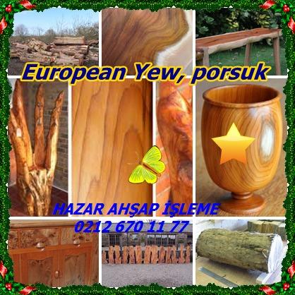 catsEuropean Yew36669