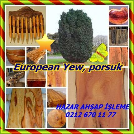 catsEuropean Yew458