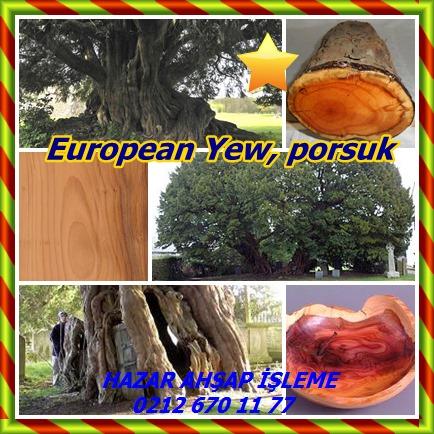 catsEuropean Yew77