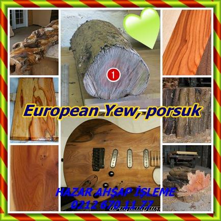 catsEuropean Yew8656