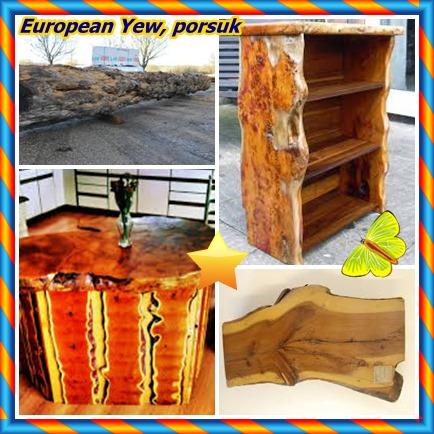 catsEuropean Yew88