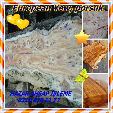 catsEuropean Yew898