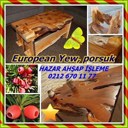 catsEuropean Yew99