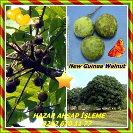 catsNew Guinea Walnut88